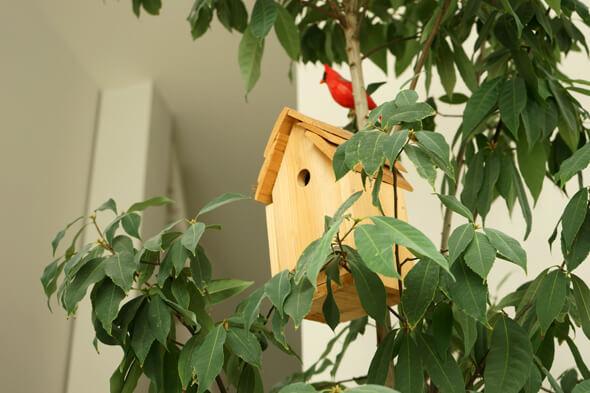 手作りの鳥かごと赤い鳥
