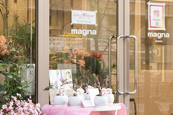 magna_19
